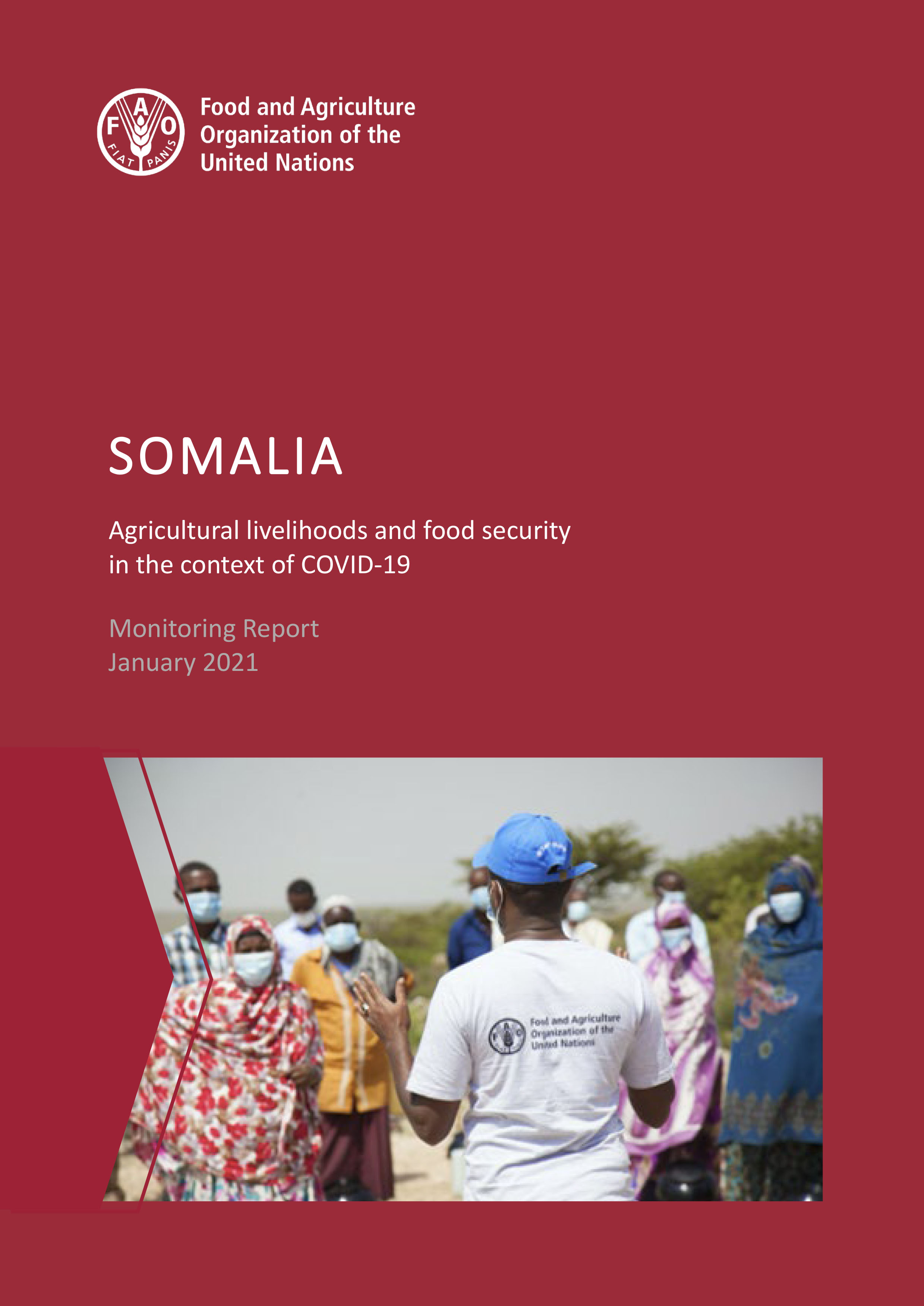 Somalia: Agricultural livelihoods and food security in the context of COVID-19